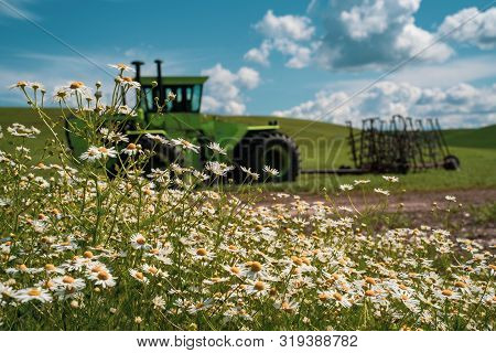 Daisies In Bloom With A Tractor Intentionally Blurred In Background, With Fields Of Rolling Grass Hi