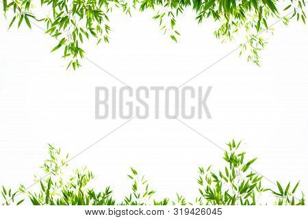 World Environment Day Concept: Bamboo Leaves Isolated On A White Background