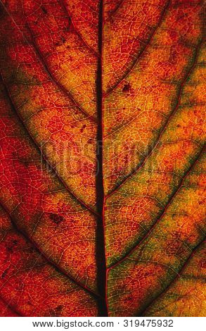 Color Autumn Leaf Green Red Orange Yellow Macro Art Abstract