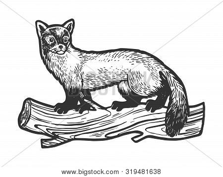 Marten Animal Sketch Engraving Vector Illustration. Tee Shirt Apparel Print Design. Scratch Board St