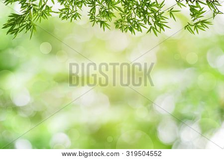 Bamboos Green Leaves And Bamboo Tree With Bokeh In Nature Forest. On Nature Abstract Blur Background