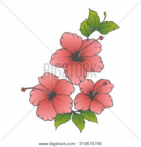 Vector Pink Hibiscus. Hand Drawn Hibiscus, Flower With Gradient Pink Color On White Background. Hibi