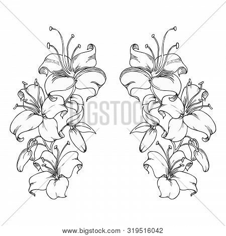 Hand Drawn Lily Flowers. Black Outlines Of Lily Flowers On White Background. Beautiful Monochrome Sk