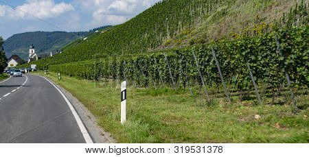 Driving Car On Famous Green Terraced Vineyards In Mosel River Valley, Germany, Production Of Quality