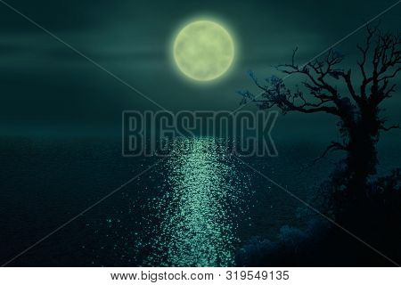 A Mystical Tree Near A Mysterious Lake With The Reflection Of The Full Moon.