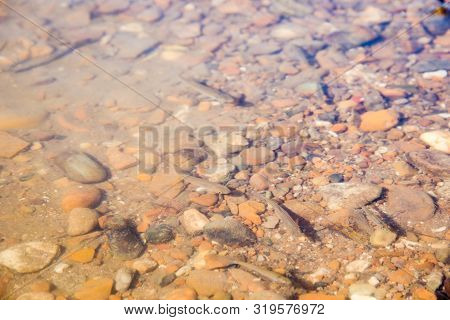 Lots Of Baby Fish In The River Water With Gravel
