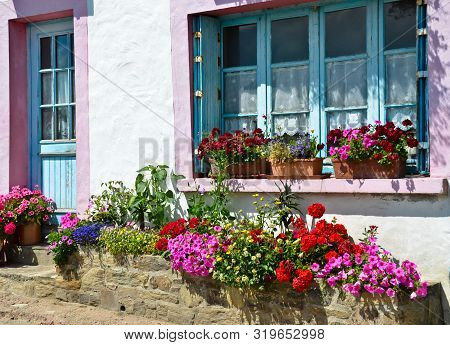 Sunny View In Front Of A Blue And Pink Window With Shutters Of An Old Farm House, With A Bush Of Pin