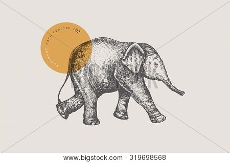 An Image Of A Little Asian Baby Elephant Drawn By Graphic Lines On A Light Isolated Background. Vect