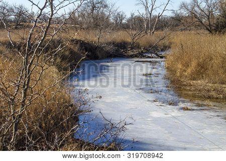 Frozen Stream In Pasture With Tall Brown Grass, Thorny Locust Tree, Rural Kansas