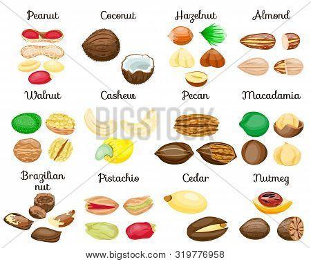 Set Of Nuts Poster,in Shell,half,whole,cut, Peeled: Nutmeg,macadamia,cashew,pistachio,almond,hazelnu