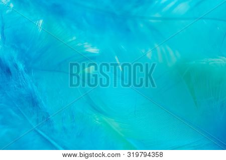 Green Turquoise And Blue Color Trends Feather Texture Background, Light Orange