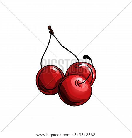 Vector Illustration Of Cherry.three Cherries Isolated On A White Background.hand Drawn Cherry On Whi