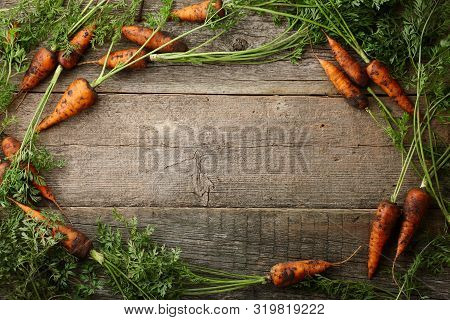 Fresh Unwashed Carrots With Greens On Old Wooden Planks Background, Copy Space