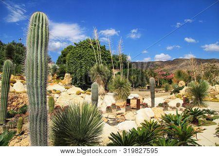 Beautiful Cactus Garden In Cabo De Gata, Nijar, Almeria, Under The Sun