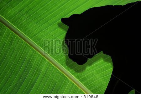 poster of photo of green palm frond and silhouette of cat in profile.