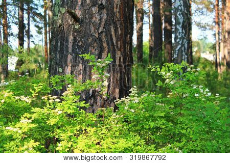 Trees And Plants In The Summer Forest
