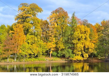 Golden Autumn In A Beautiful Park In A Sunny Day