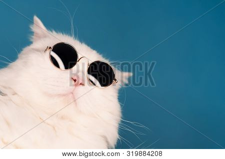 Close Portrait Of White Furry Cat In Fashion Sunglasses. Studio Photo With Copy Space. Luxurious Dom
