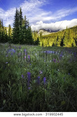 Mountain Peaks And Wildflowers