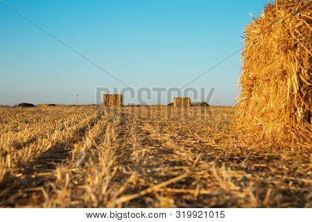 Beveled Wheat Field At Sunset , Haystacks , Straw .