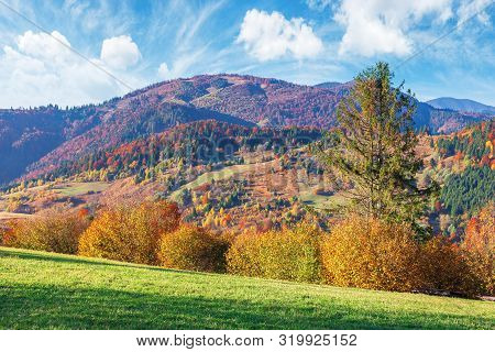 Trees In Fall Foliage In Mountainous Countryside. Beautiful Autumn Landscape In Afternoon Light. Gra