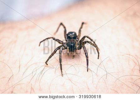 Poisonous Spider Over Person Arm, Poisonous Spider Biting Person, Concept Of Arachnophobia, Fear Of