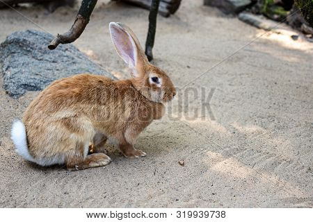 Full Body Of Female Brown European Hare. Photography Of Nature And Wildlife.