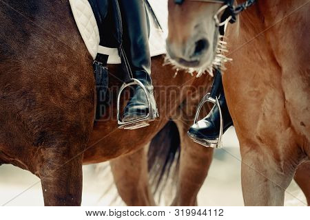 Equestrian Sport.two Sports Horses.the Leg Of The Rider In The Stirrup, Riding On A Horse. Dressage