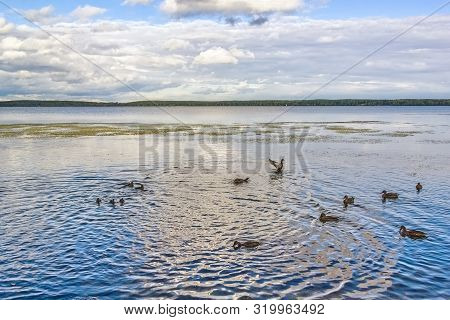 Picturesque Landscape With Ducks On The Lake And Reflection Of The Blue Sky In The Water On A Summer