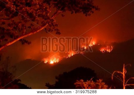 Amazon Forest Fire Disater Problem.fire Burns Trees In The Mountain At Night.
