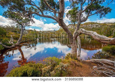 Landscape Of Cradle Mountain Tasmania, Australia.