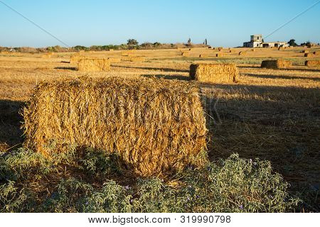 Beveled Wheat Field At Sunset , Haystacks , Straw .