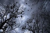 scary crows flying and resting on trees with nests poster