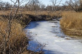 Frozen Stream In Pasture With Tall Brown Grass, Thorny Locust Tree, Rural Kansas