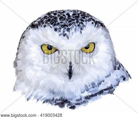 Isolated Close-up Portrait Of A Polar Owl. The Owl Looks At You With Yellow Round Eyes. Illustration
