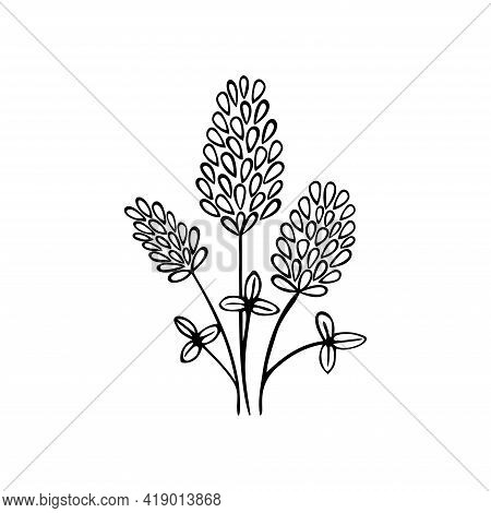Single Hand Drawn Floral Element On A White Isolated Background. Blooming Clover. Doodle, Simple Out
