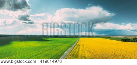 Aerial View Of Agricultural Landscape With Flowering Blooming Rapeseed, Oilseed And Green Wheat In F