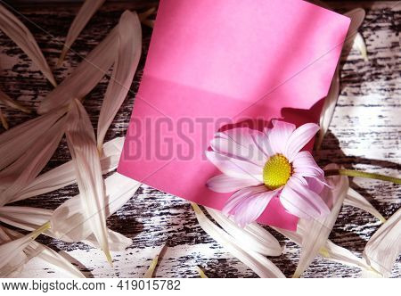 Blurred For Empty Card  With Summer Flower Chamomile. Light And Shadow. Nostalgic Vintage Background