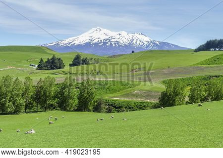 Sunny Idyllic Scenery Around Mount Ruapehu At The North Island Of New Zealand