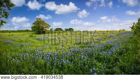 Serene Bluebonnet-filled Pasture In Rural North Texas