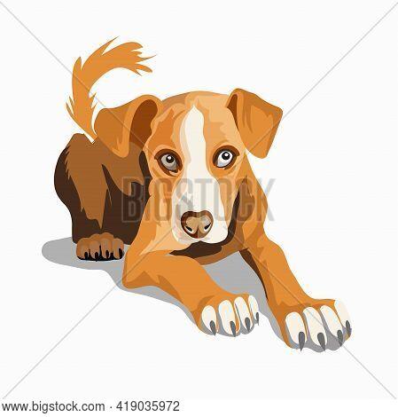 Cute Beautiful Brown Dog. Ridgeback Or Beagle. A Beautiful White Dog Sitting On A Ground. Isolate. V