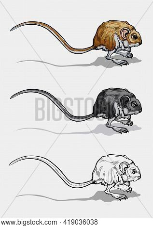 Light Small Jumper. A Jerboa, A Field Mouse With A Very Long Tail. Mouse, A Rodent With A Long Tail.