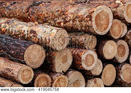 Log Trunks Pile. The Logging Timber Forest Wood Industry