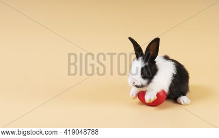 Easter Holiday And Baby Bunny Concept. Newborn Black And White Rabbit Sitting With Red Paint Easter