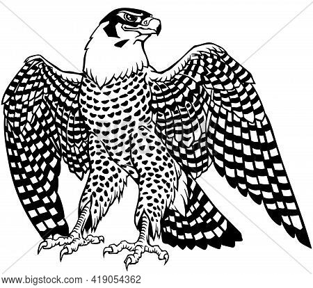 Falcon A Hunter With Opened Its Wings. Bird Of Prey. Falconry. Black And White Isolated Vector Illus