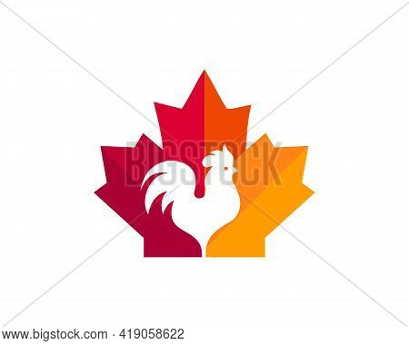 Canadian Chicken Logo. Maple Leaf With Roster Vector. Maple Chicken Roster Logo Design