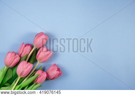 Pink Tulips Flowers On Blue Background. Spring Flowers Tulips. Card For Mothers Day, 8 March, Happy