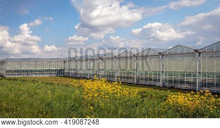 Yellow Flowering Rapeseed In The Front Of A Dutch Horticultural Greenhouse. It Is A Sunny Day In The