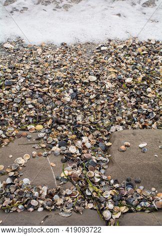 Shells Washed Up On The Beach At Grado In Friuli-venezia Giulia, North East Italy