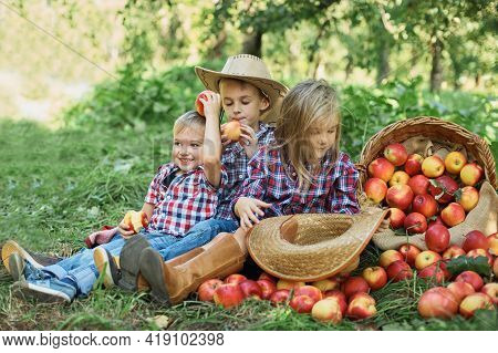 Children With Apple In The Apple Orchard. Child Eating Organic Apple In The Orchard. Harvest Concept